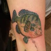 Realistic fish tattoo